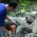 Sawing a fallen tree